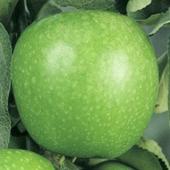 vanzare pomi fructiferi MAR - GRANNY SMITH ciumbrud